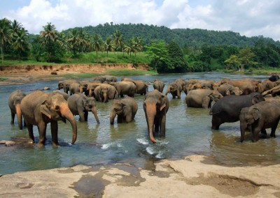Pinnawala sierociniec słoni