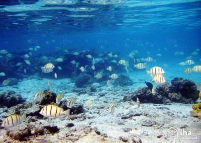 nurkowanie na Malediwach